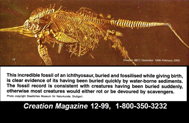 1391241759_tmp_fast_fossil