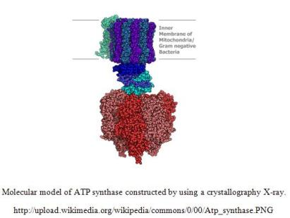 atp synthase ready for site